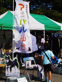 子猫を救おう!アニパル仙台の「しっぽな倶楽部」