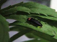 ホタルの生息環境を守る「青葉区ほたるの里づくり協議会」