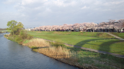 花巻市内の桜