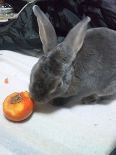青葉嬢と柿