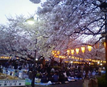 上野の花見道