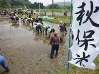 秋保米の田植え体験 と 早苗ぶり