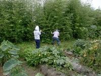 枝豆収穫祭、詳細報告(その2)