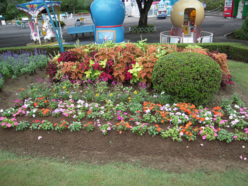夏の花を植え替え