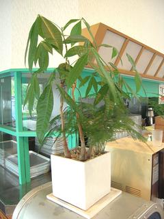 レストハウスの観葉植物