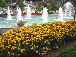 噴水花壇のマリーゴールド