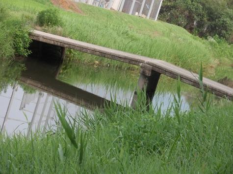 三間堀の橋