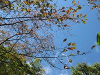 秋なので..........