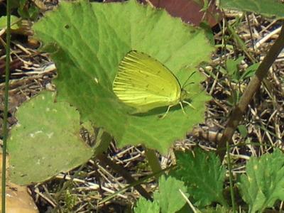 トンボと蝶