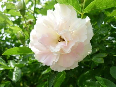 薔薇の香りの中で☆