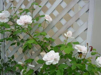 薔薇の園☆