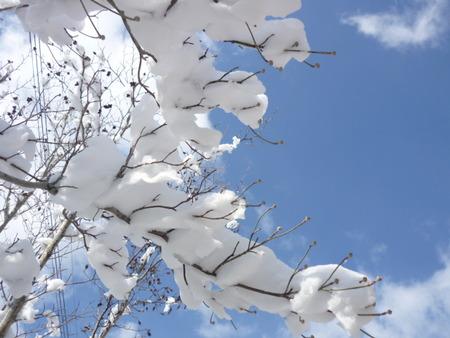 雪の白・・・。