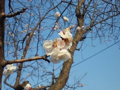 桜、竹の子、春爛漫♪