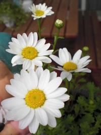 花と大地の栄養!