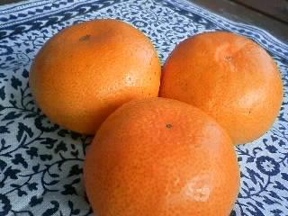 コミュニケーションの色 「オレンジ」♪