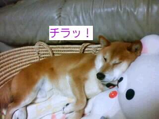 シブイ寝顔。ZZZ・・・