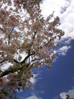 桜とアボガド♪