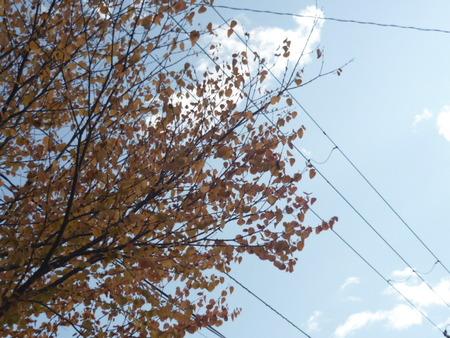 秋は寂し。。。