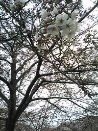 除菌成功!&桜。
