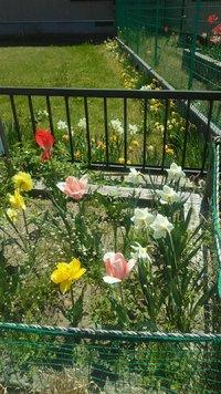 花の季節(*´▽`*)