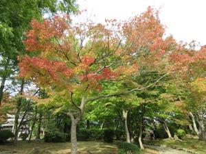 秋の公園♪