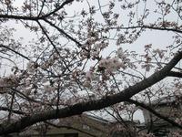 開花(^_^♪
