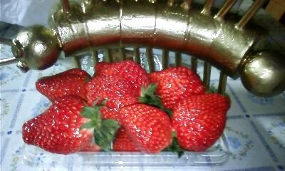 イチゴとびっちゃん