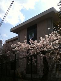 桜散歩〜松島第一小学校