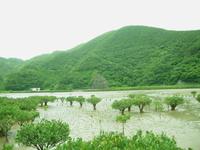 水に生きる木。 2014/06/10 07:28:00