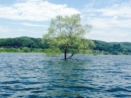 水に生きる木。