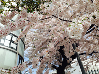函館トリップー③ 2014/05/30 07:30:00