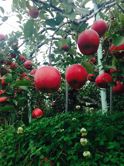 林檎の森。