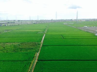 【緑】それは、東北のカラフル。2014
