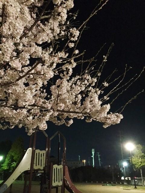 ☆春の息吹☆