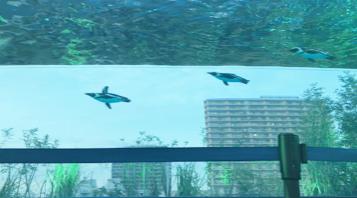 空飛ぶペンギン!