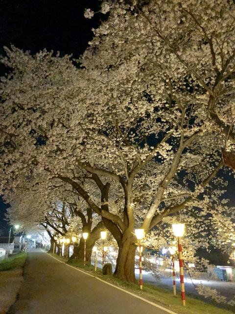 *千本桜*