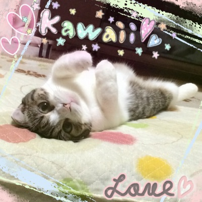 ♪我が家の愛猫♪