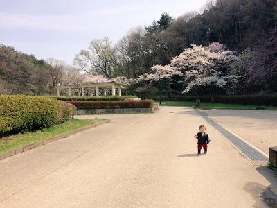 お花見しに公園へ❀*.