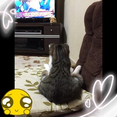 我が家の愛猫 Part2