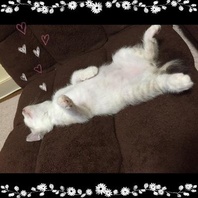我が家の愛猫・・・に、なりかけた猫