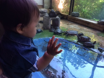 八木山動物園( ・ω・) ♪