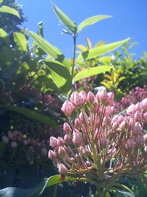 my little garden/saitosaiさんへ