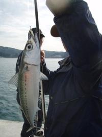 気仙週末釣り情報