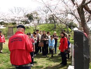 桜満開の日和山、石巻専修大学での企画展