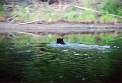 森林火災の煙、泳ぐクマ、ユーコン川に架かる虹。