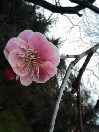 春を探しに