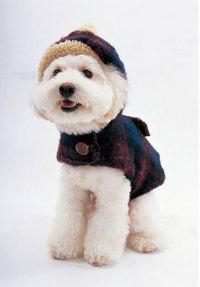 あなたは 愛犬に服を着せる派!?