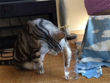 水素水...2