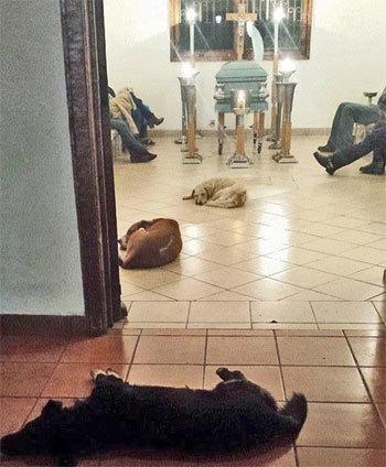 お葬式に現れた野良犬たち
