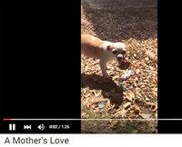 子犬を亡くした母犬がした行動